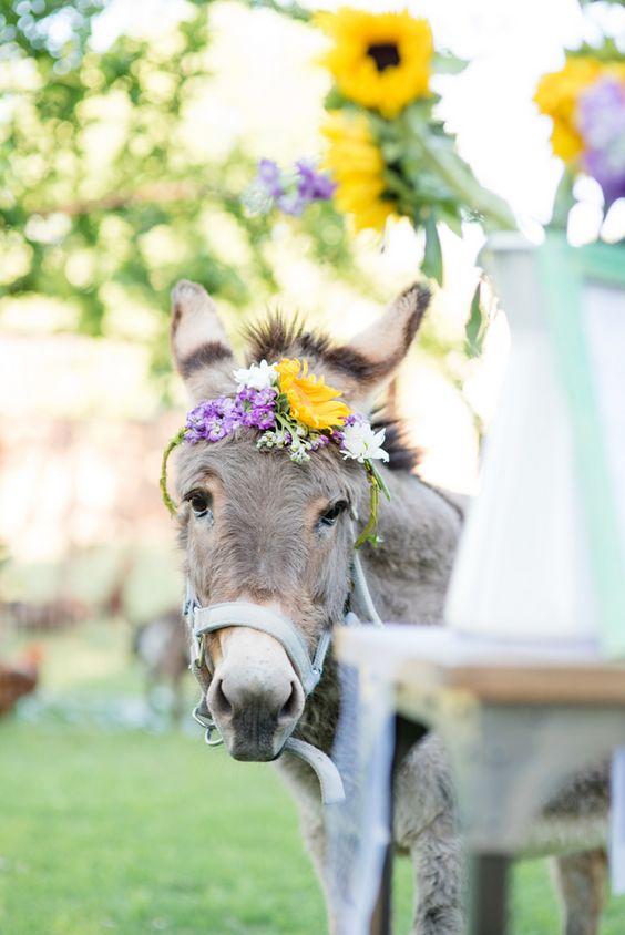 It's a donkey in a flower crown!