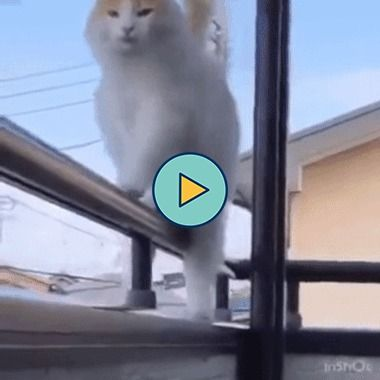 para um gato nada é impossível