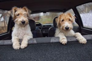 How to Remove Pet Odors and Stains from Your Car: