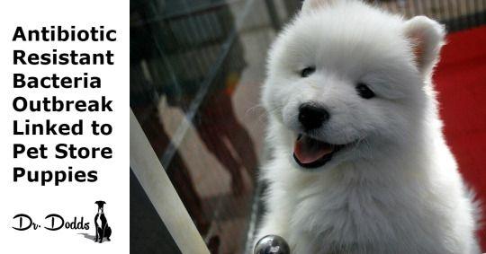 Outbreak Of Antibiotic Resistant Campylobacter Bacteria Linked To Pet Store Puppies Pet Store Puppies Pet Store Pets