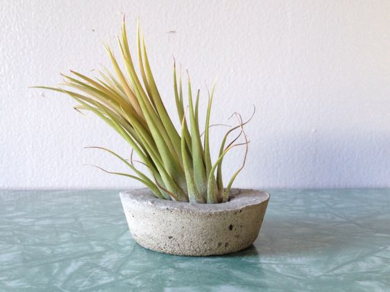 tiny round concrete container + optional air plant. modern wedding favor & decor. handmade minimalist planter pot. by ReRunRoom on Etsy https://www.etsy.com/listing/187882460/tiny-round-concrete-container-optional