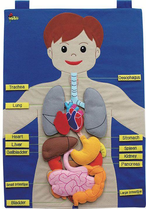 افكار وسائل تعليمية لمادة العلوم ابتدائي مجسمات للعلوم بالعربي نتعلم Human Body Activities Human Body Projects Science Projects For Kids