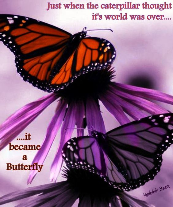 The caterpillar and butterfly..