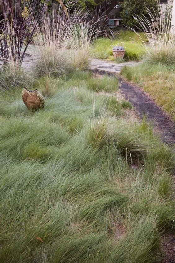 Lawn grasses and california on pinterest for Wild ornamental grasses