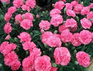 Gambar Bunga Mawar Paling Cantik Di Dunia Mawar Liar Yang Ada Di Dunia Memiliki Lebih Dari 100 Spesies Sepuluh Jenis Bunga Pali Bunga Mawar Wallpaper Bunga