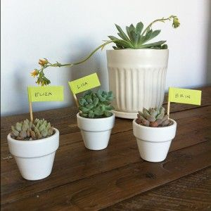 Miniature succulents as place settings on the 'Splash That' event inspiration blog