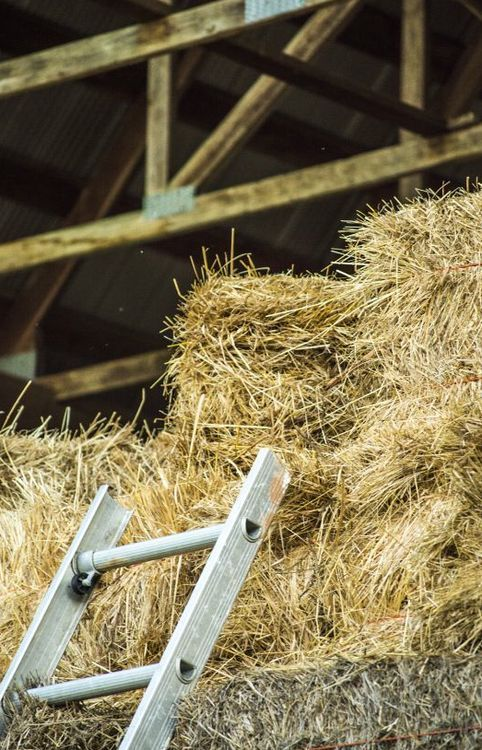 We had so much fun playing in the hayloft when I was a kid.