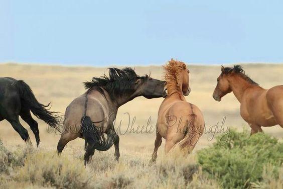 """Wyoming. """"Back off, buckaroo!"""""""