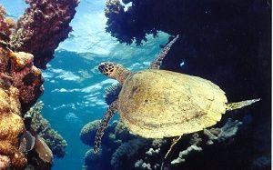 Cairns Dive Liveaboard - 3 Day Diving Trip - Pro Dive Cairns Scuba Diving - Australia
