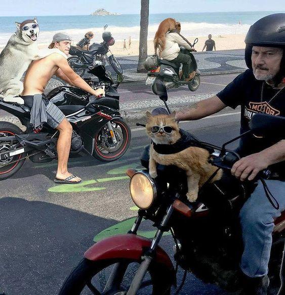19 αστείες φωτογραφίες που είναι απλά απίστευτες (Μέρος 2)