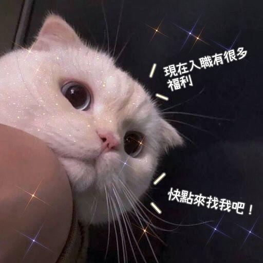 🌻有手機就能工作#兼職#學生#寶媽#網上兼職#在家工作#追星#迷妹#香港 ...