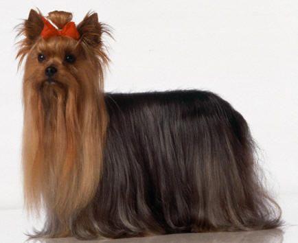 crochê para cães e gatos - Pesquisa Google