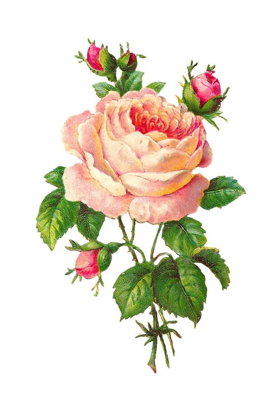 Digital Pink Rose Imag: