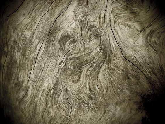 forêt fantome - Google Search