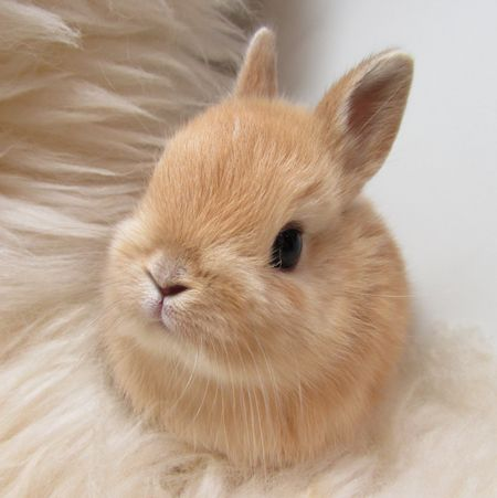 """People say our intense love of bunnies is creepy at our age, but history will prove them to be heartless bastards."" Psych"