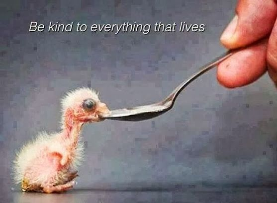 "A Flamingo Chick:  ""Be kind to everything that lives, ensuring that fragile life survives and thrives."":"