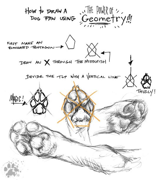pawlygons by screwbald on deviantart animal anatomy