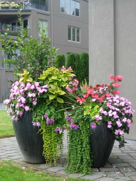 Shrubs and annuals in tall pots. I'm thinking boxwood