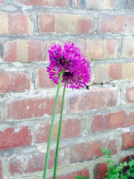 Love my new little flower in my badly taken care English garden