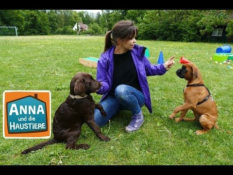 Ein Tag In Der Hundeschule Information Fur Kinder Anna Und Die Haustiere Spezial Youtube In 2020 Haustiere Hunde Hundeschule