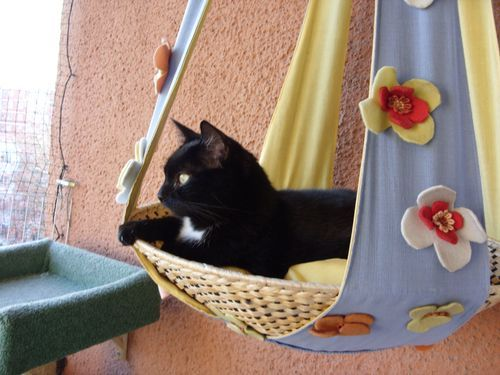 Aussichtsplateau für Katzen-Balkon