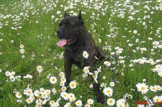 Large dog photo