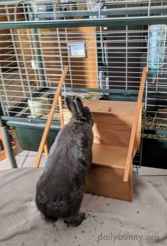 Bunny Learns To Climb His Custom Built Stairs October 29 2019 Daily Bunny Bunny House Bunny