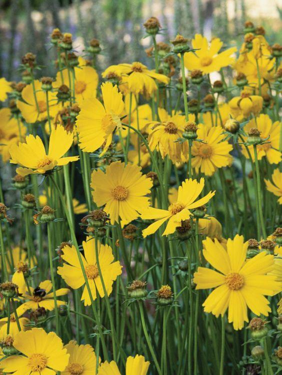The Best Plants for Dry Soil