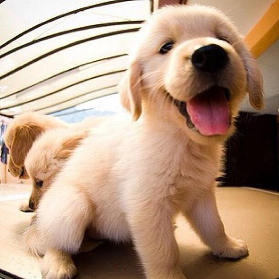 RT if you want to take this puppy home.  ~