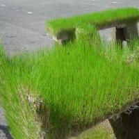 Jardim com Materiais Reciclados   Recicla e Decora