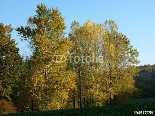 Bäume mit Herbstlaub im Licht der untergehenden Sonne zwischen Oerlinghausen und Asemissen