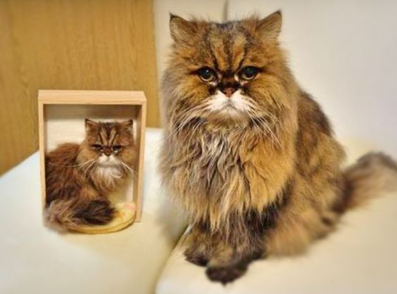 How insanely awesome is this!  Real cat with little needle felted cat by Hinali from Japan.  I love her!:
