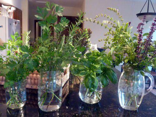 10 Hierbas Aromáticas Que Puede Cultivar En Casa Usando Sólo Agua Macetas Plantas Aromaticas Plantas Aromaticas De Interior Plantas En Agua
