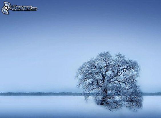 lonely tree, snowy tree, snowy landscape