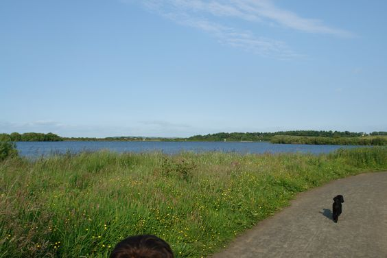"""...one of Shona's dogs.. the lake to """"Dams to Darnley"""" Barrhead Scotland"""