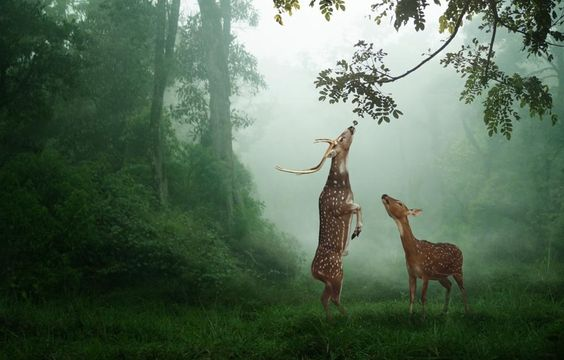breakfast by budi 'ccline': God S Creatures, Wild Life, Budi Ccline, Dear Deer, Axis Deer, Beautiful Creatures