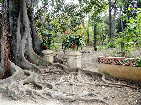 Orto Botanico Sicilië - Mieke Löbker - Picasa Web Albums
