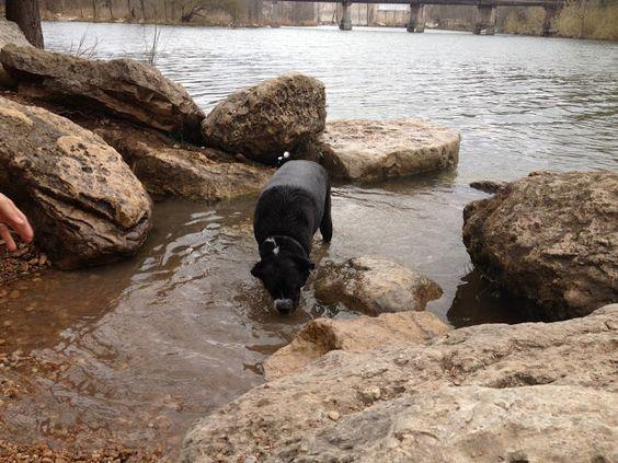 Free Fun in Austin: Red Bud Isle Dog Park