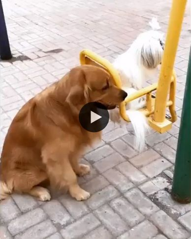 cachorrinho balançando os cachorrinhos