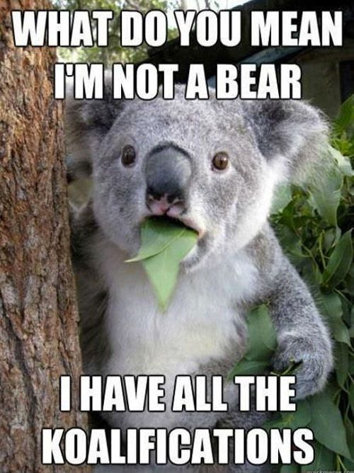 Funny Animal Pictures with Words   ... week (50 Photos) » 98 funny-animal-stuff-fb214926-sz453x635-animate