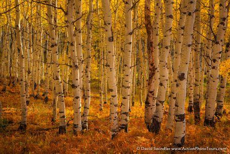 Fern Grove by David Swindler
