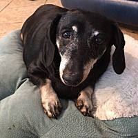 Pet Card Dachshund Adoption Dachshund Rescue Pet Adoption
