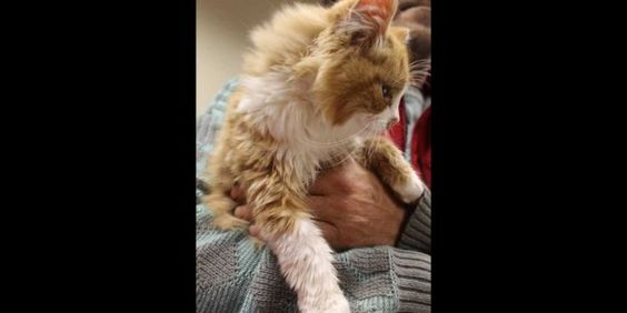 Cash and Tango Abandoned At Remote Location Inside White Box In Snow | THE PUSSINGTON POST
