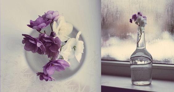 Violets... by mechtaniya.deviantart.com on @deviantART