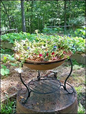 Repurposed Fire Pit Started out as a $25 dollar store cheapie, too small and too cheap looking, repainted bowl and planted it.