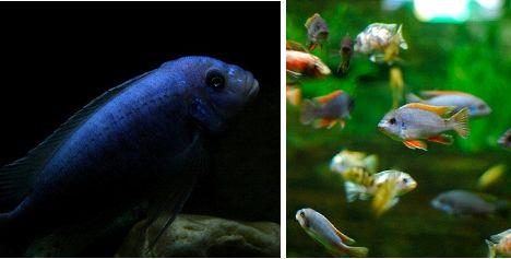 Freshwater aquarium, Aquarium and Strange animals on Pinterest