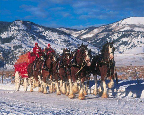 budweiser clydesdales winter bliss 1000 piece puzzle http