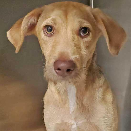 Dogs And Puppies For Adoption In San Diego Helen Woodward Animal Center Puppy Adoption Animals Dog Behavior