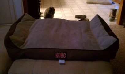 Kong Large Dog Bed (040246961505)