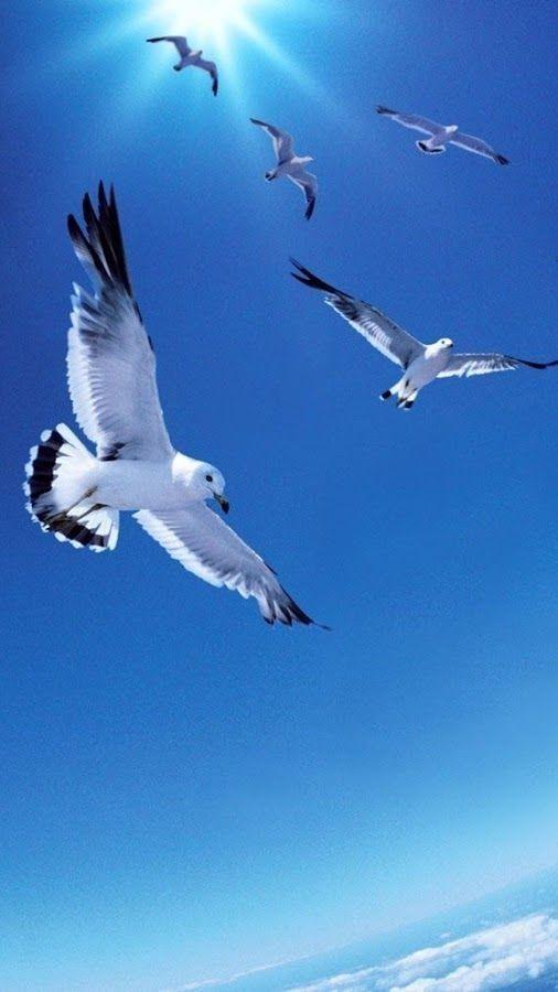 Pin En Birds Flying